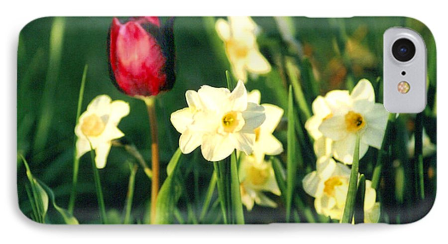 Tulips IPhone 7 Case featuring the photograph Royal Spring by Steve Karol