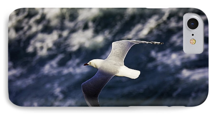 Seagull IPhone 7 Case featuring the photograph Seagull In Wake by Sheila Smart Fine Art Photography
