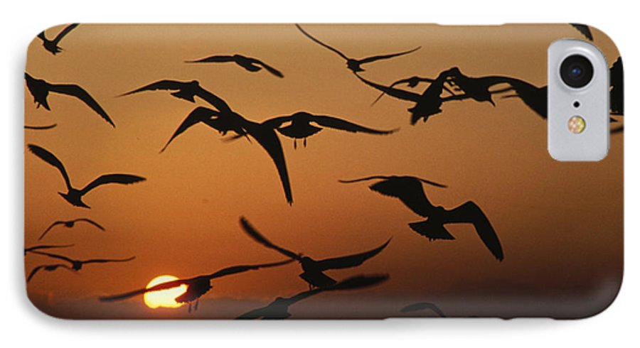 Birds IPhone 7 Case featuring the photograph Seagulls In Sunset by Carl Purcell