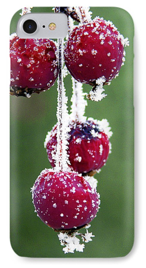 Berries IPhone 7 Case featuring the photograph Seasonal Colors by Marilyn Hunt