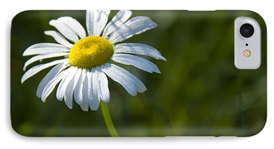 Daisy IPhone 7 Case featuring the photograph Searching For Sunlight by Idaho Scenic Images Linda Lantzy