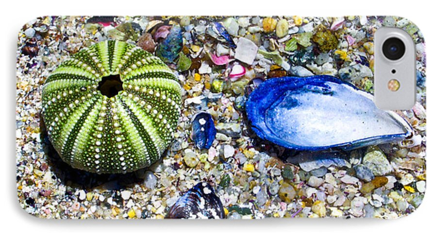 Seashore IPhone 7 Case featuring the photograph Seashore Colors by Douglas Barnett