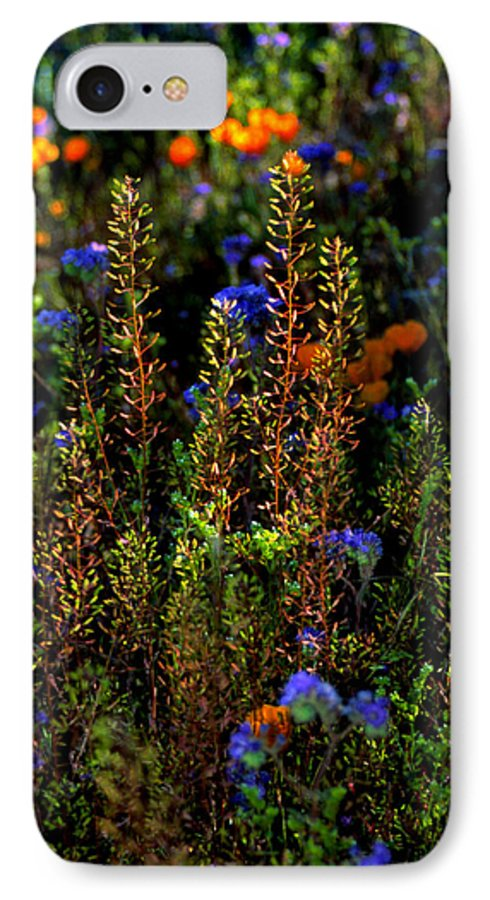 Flowers IPhone 7 Case featuring the photograph Shimmers by Randy Oberg