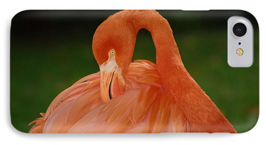 Flamingo IPhone 7 Case featuring the photograph shy by Gaby Swanson