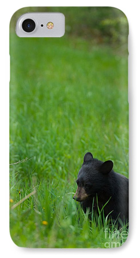 Black Bear IPhone 7 Case featuring the photograph Shyness by Birches Photography