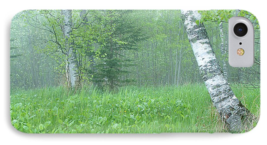 Landscape IPhone 7 Case featuring the photograph Silent Birch by Bill Morgenstern