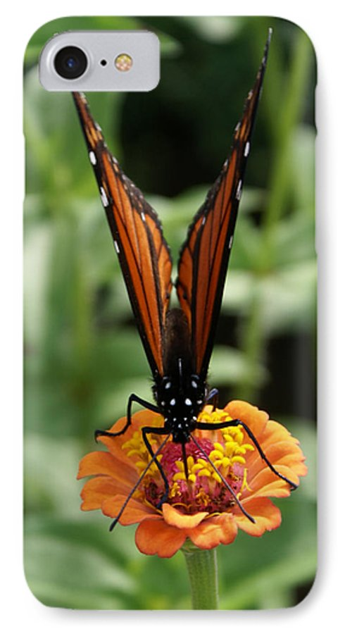 Butterflies IPhone 7 Case featuring the painting Sip Sip Away by Debbie May