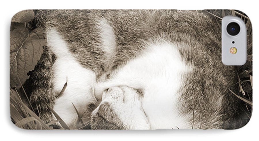 Pets IPhone 7 Case featuring the photograph Sleeping by Daniel Csoka