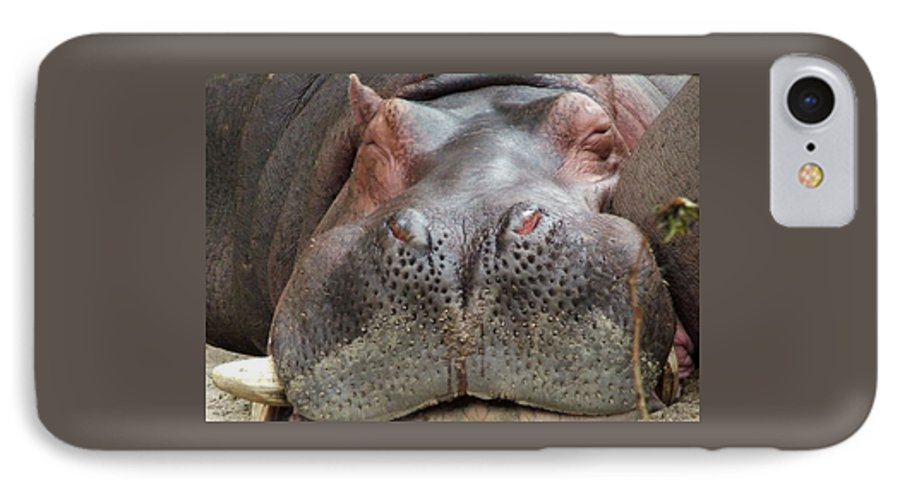 Hippopotamus IPhone 7 Case featuring the photograph Sleeping Hippo by Tiffany Vest