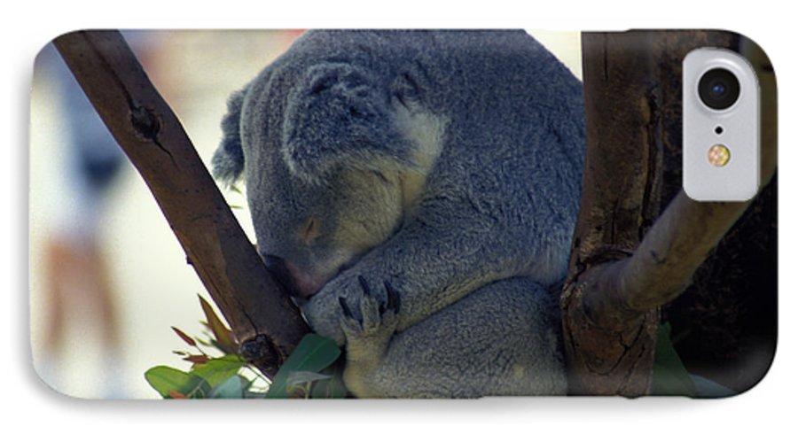 Sleep IPhone 7 Case featuring the photograph Sleepy Koala Bear by Carl Purcell
