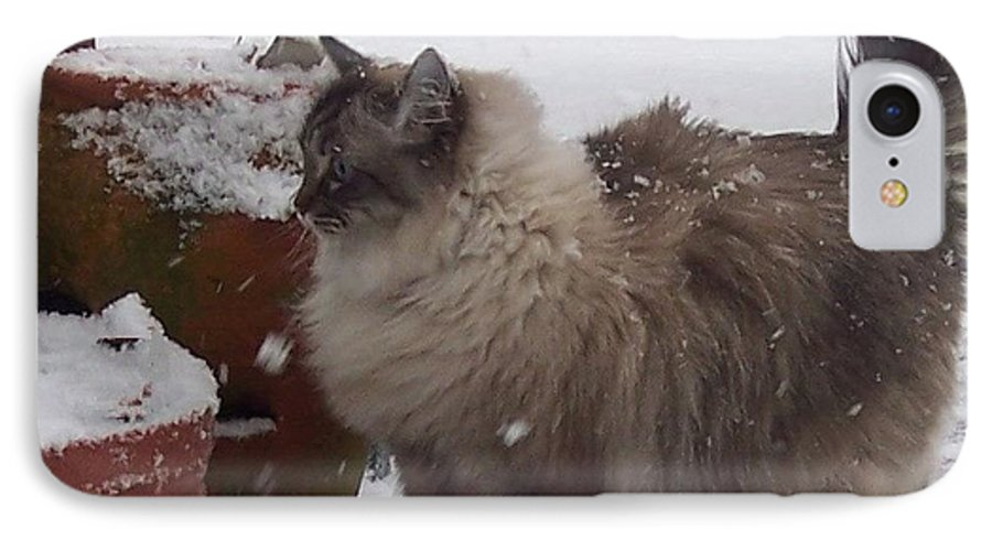 Cats IPhone 7 Case featuring the photograph Snow Kitty by Debbi Granruth