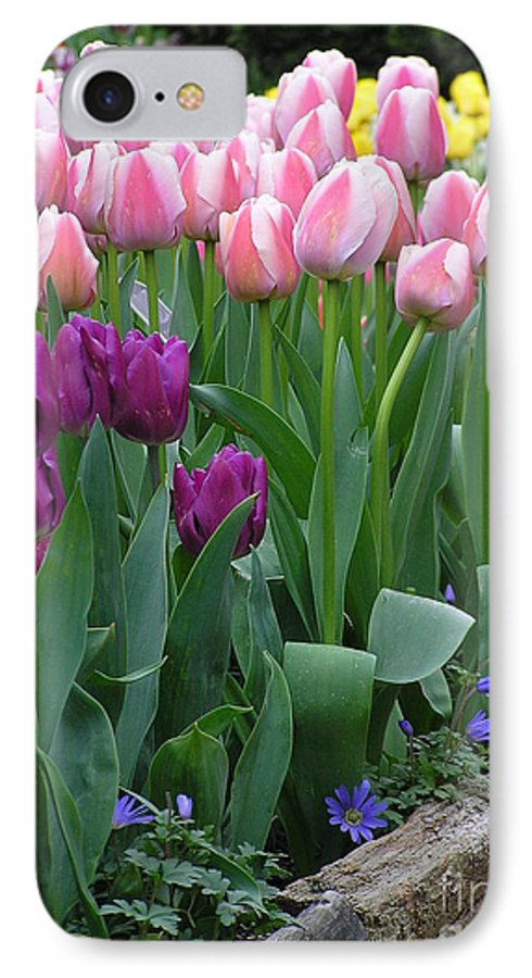 Tulips IPhone 7 Case featuring the photograph Spring Colors by Louise Magno