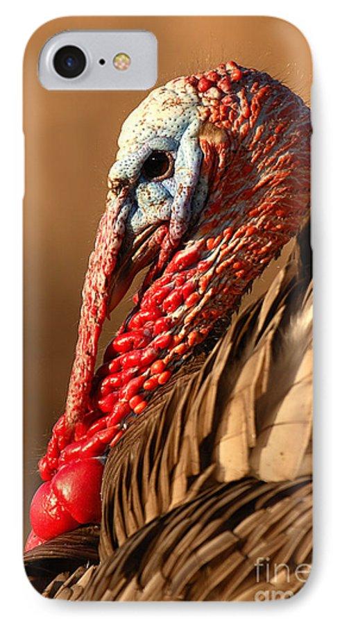 Turkey IPhone 7 Case featuring the photograph Spring Portrait Of Wild Turkey Tom by Max Allen