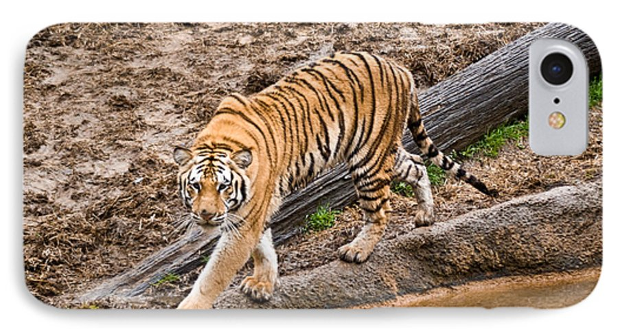Tiger IPhone 7 Case featuring the photograph Stalking Tiger - Bengal by Douglas Barnett