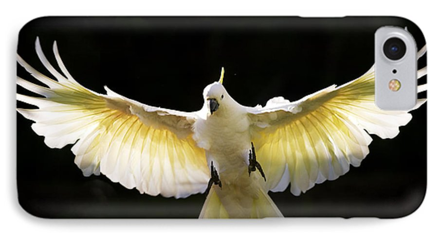 Sulphur Crested Cockatoo Australian Wildlife IPhone 7 Case featuring the photograph Sulphur Crested Cockatoo In Flight by Avalon Fine Art Photography