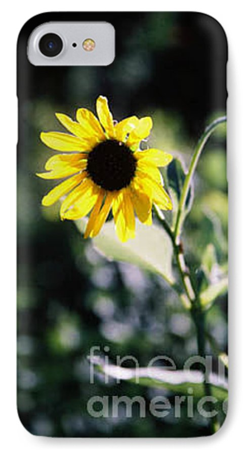 Sunflower IPhone 7 Case featuring the photograph Summer Sunshine by Kathy McClure