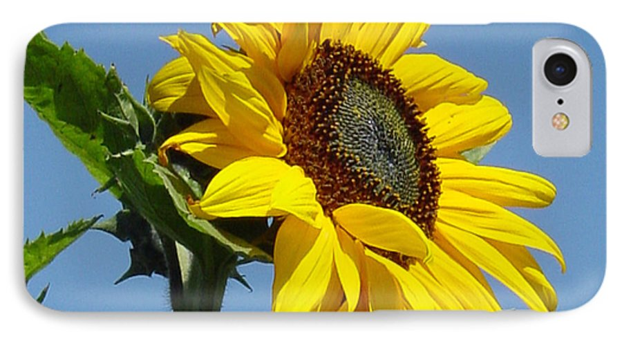 Sunflower IPhone 7 Case featuring the photograph Sun Goddess by Suzanne Gaff