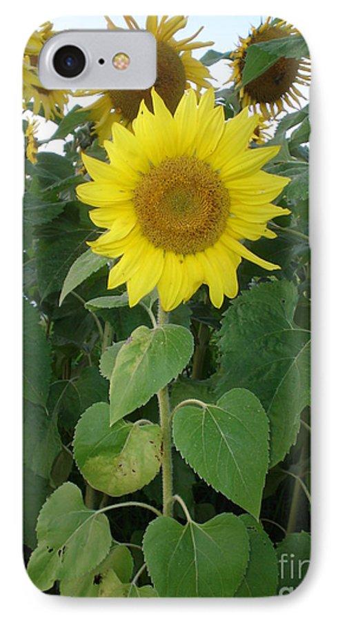 Sunflower's IPhone 7 Case featuring the photograph Sunflower Amungst Sunflower's by Chandelle Hazen