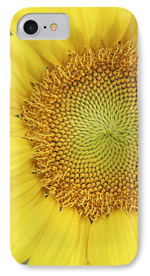 Sunflower IPhone 7 Case featuring the photograph Sunflower by Margie Wildblood