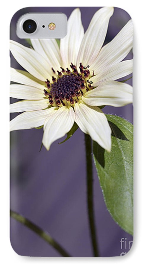 Helianthus Annus IPhone 7 Case featuring the photograph Sunflower by Tony Cordoza