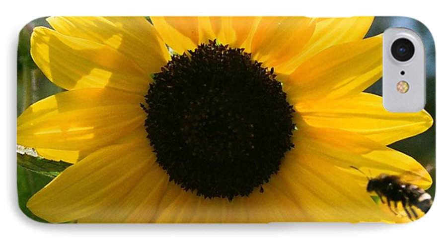 Flower IPhone 7 Case featuring the photograph Sunflower With Bee by Dean Triolo