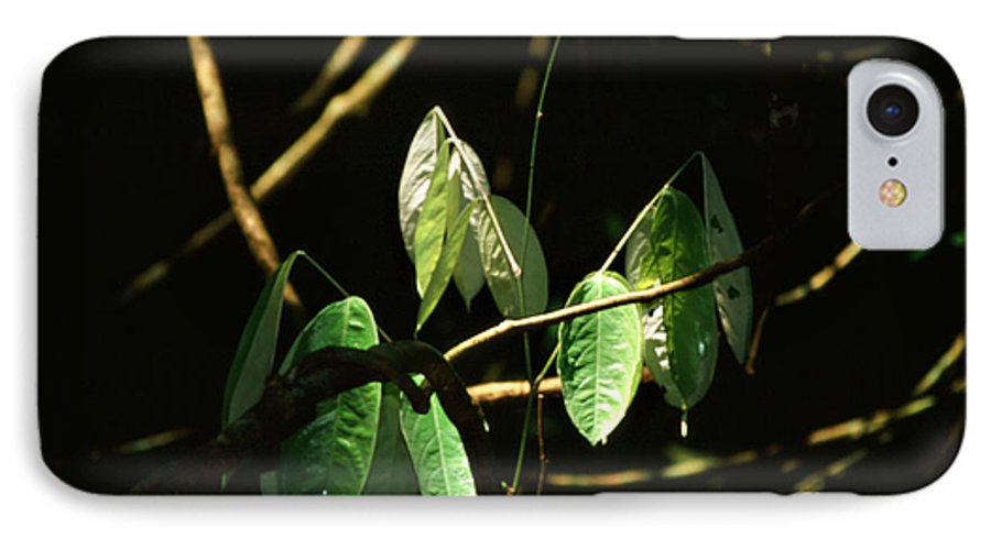 Leaves IPhone 7 Case featuring the photograph Sunlit Leaves by Kathy McClure