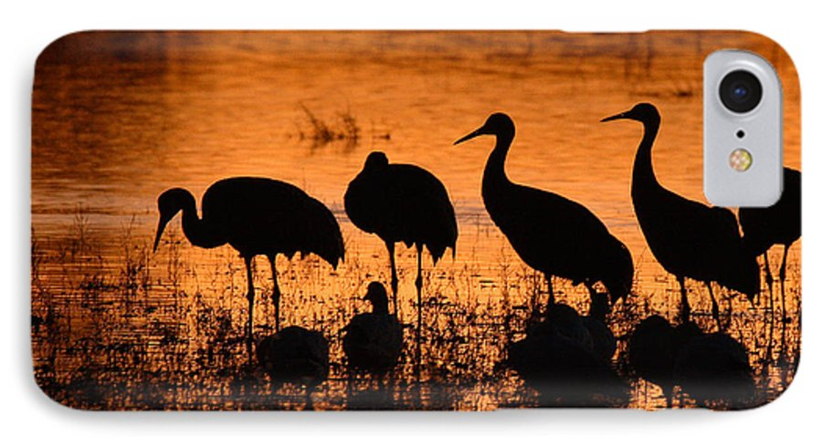 Crane IPhone 7 Case featuring the photograph Sunset Reflections Of Cranes And Geese by Max Allen