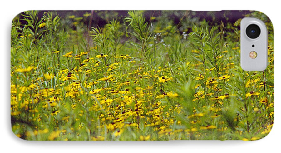 Nature IPhone 7 Case featuring the photograph Susans In A Green Field by Randy Oberg