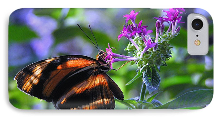 Butterfly IPhone 7 Case featuring the photograph Sweet Nector by Louise Magno