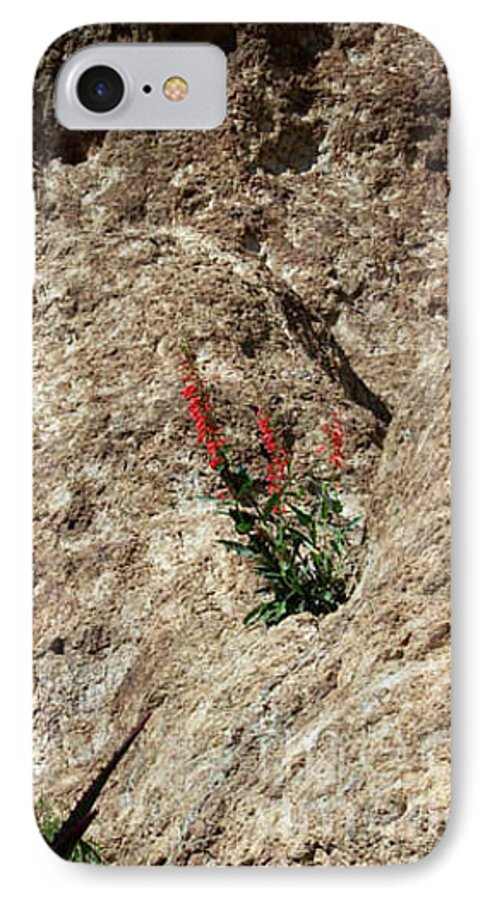 Wildflowers; Flowers IPhone 7 Case featuring the photograph Tenacity by Kathy McClure
