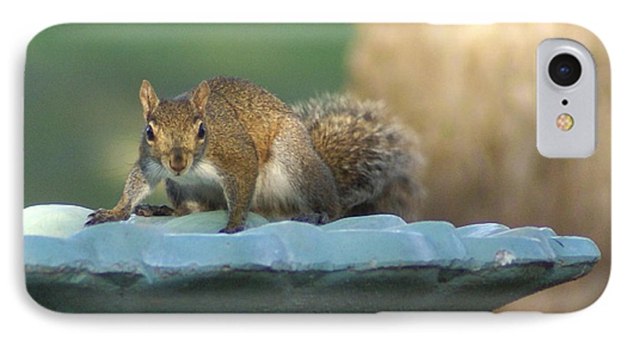 Squirrel IPhone 7 Case featuring the painting Testing The Waters by Debbie May
