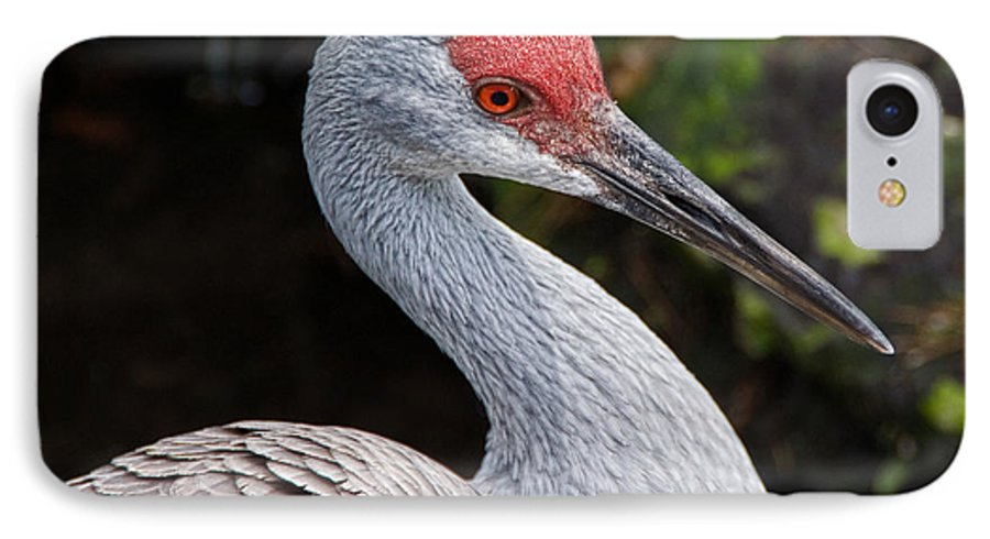 Bird IPhone 7 Case featuring the photograph The Greater Sandhill Crane by Christopher Holmes