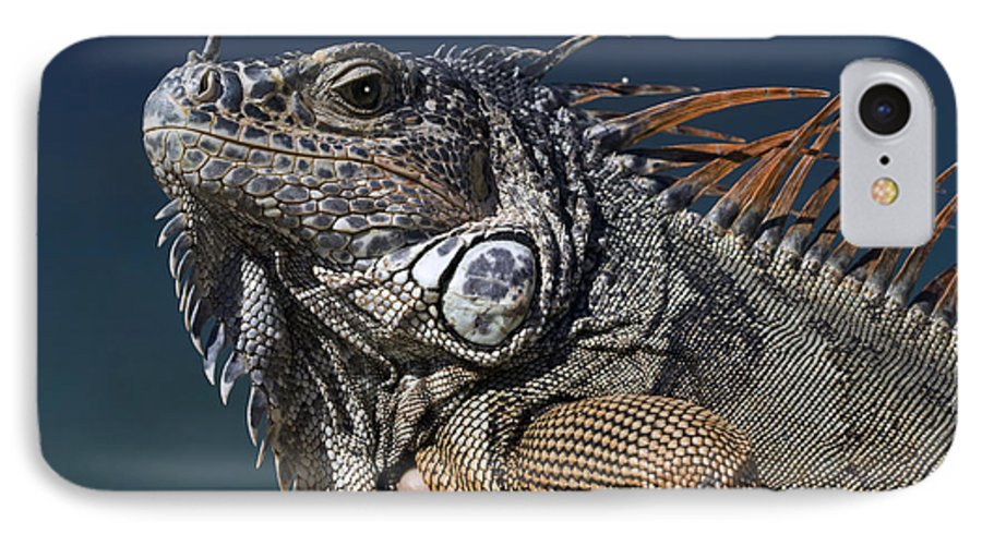 Animal IPhone 7 Case featuring the photograph The Night Of The Iguana by Carl Purcell