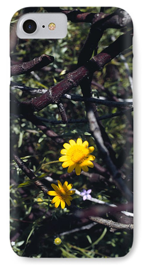Flower IPhone 7 Case featuring the photograph The Prisoner by Randy Oberg