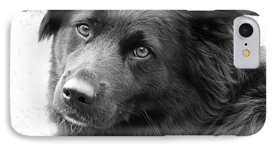 Dog IPhone 7 Case featuring the photograph Thinking by Amanda Barcon