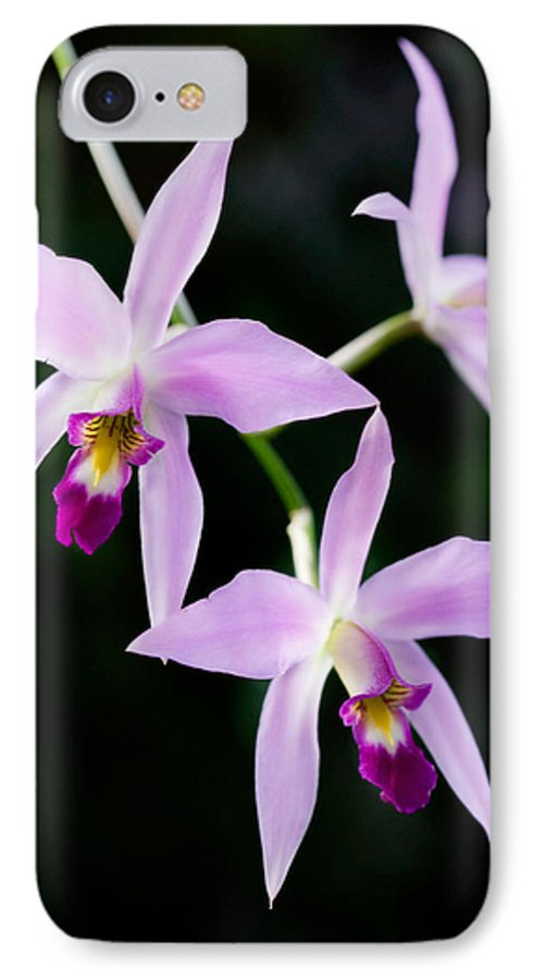 Orchid IPhone 7 Case featuring the photograph Three Orchids by Marilyn Hunt