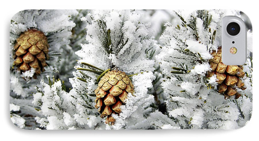 Frosty IPhone 7 Case featuring the photograph Three Pinecones by Marilyn Hunt