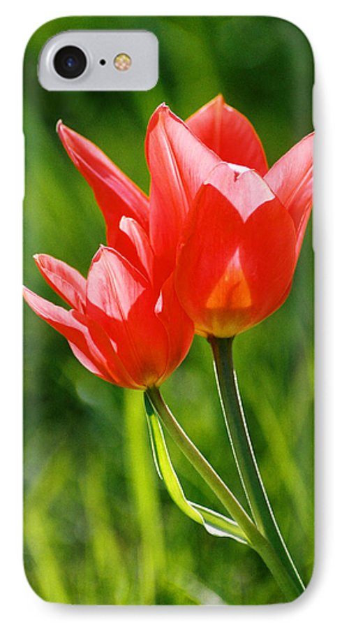 Flowers IPhone 7 Case featuring the photograph Toronto Tulip by Steve Karol