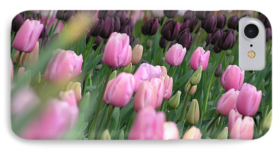 Tulips IPhone 7 Case featuring the photograph Tulip Dreams by Louise Magno