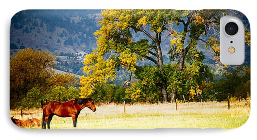 Animal IPhone 7 Case featuring the photograph Two Horses by Marilyn Hunt