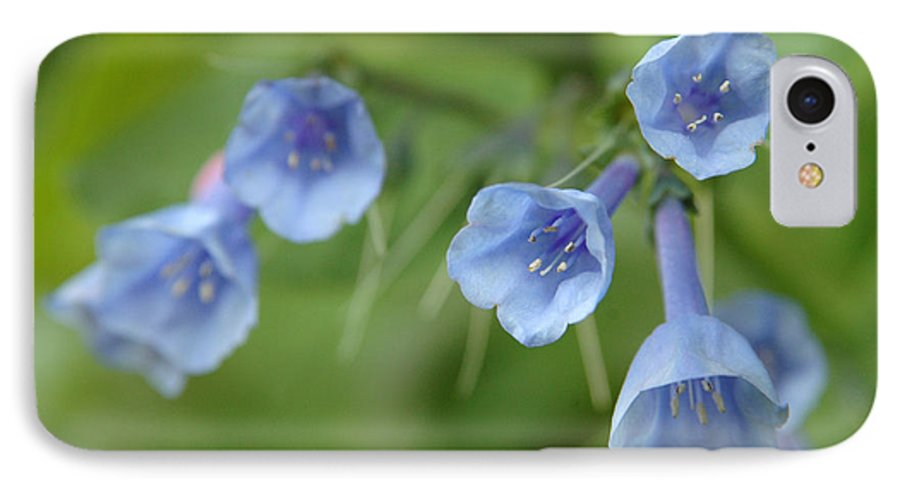 Bluebells IPhone 7 Case featuring the photograph Virginia Bluebells I by Kathy Schumann