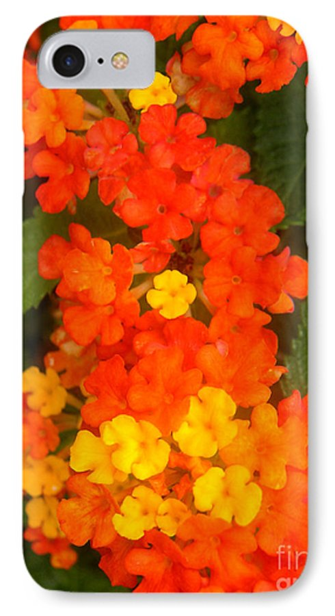 Nature IPhone 7 Case featuring the photograph Volcanic Display by Lucyna A M Green