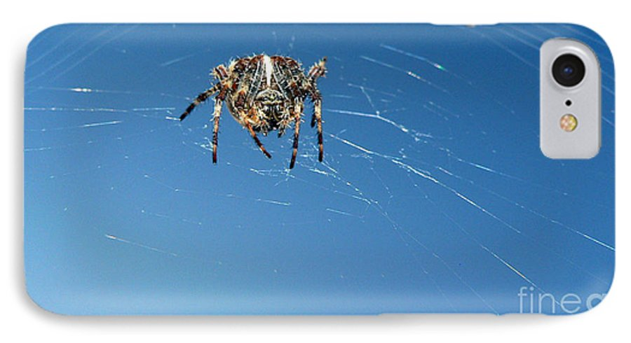 Spider IPhone 7 Case featuring the photograph Waiting by Larry Keahey