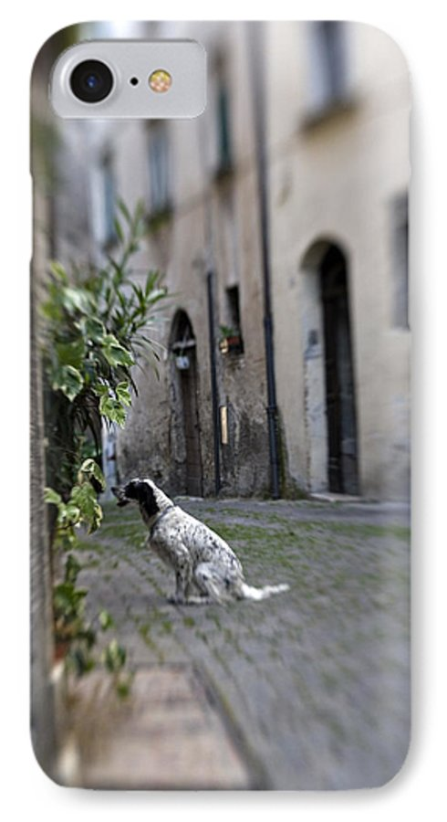 Dog IPhone 7 Case featuring the photograph Waiting by Marilyn Hunt