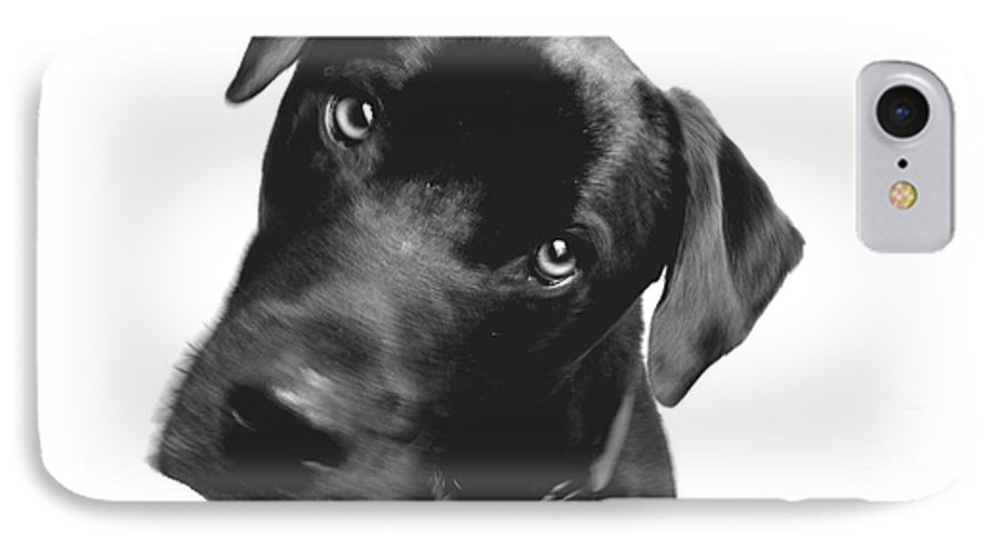 Labrador IPhone 7 Case featuring the photograph What by Amanda Barcon