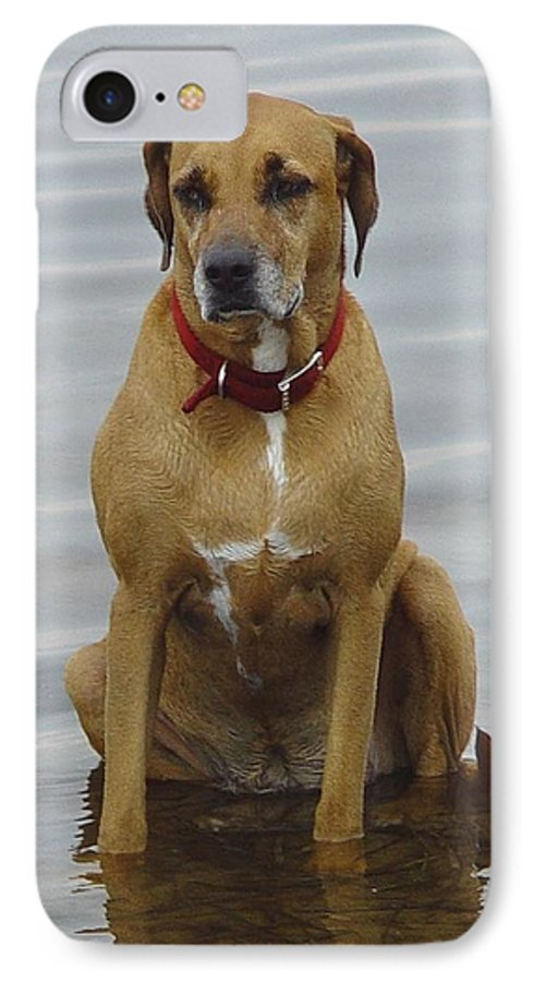 Dog IPhone 7 Case featuring the photograph Where's The Pillow by Debbie May