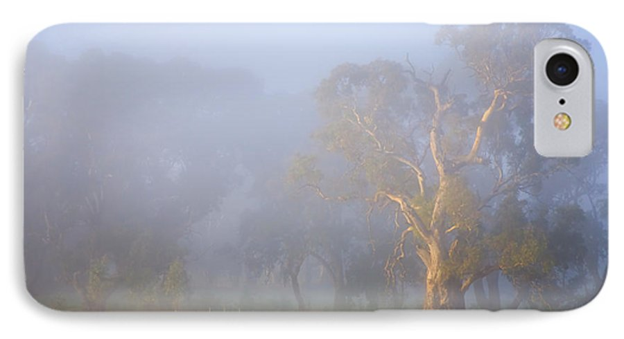 Tree IPhone 7 Case featuring the photograph White Gum Morning by Mike Dawson