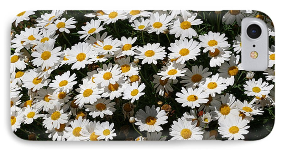 White IPhone 7 Case featuring the photograph White Summer Daisies by Christine Till