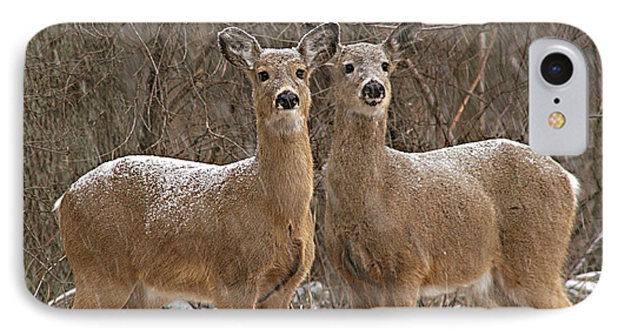Deer IPhone 7 Case featuring the photograph White-tailed Deer Pair Peering Out From Snowstorm by Max Allen