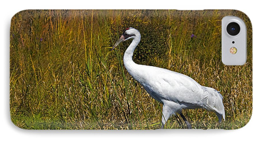 whooping Crane IPhone 7 Case featuring the photograph Whooping Crane by Al Mueller